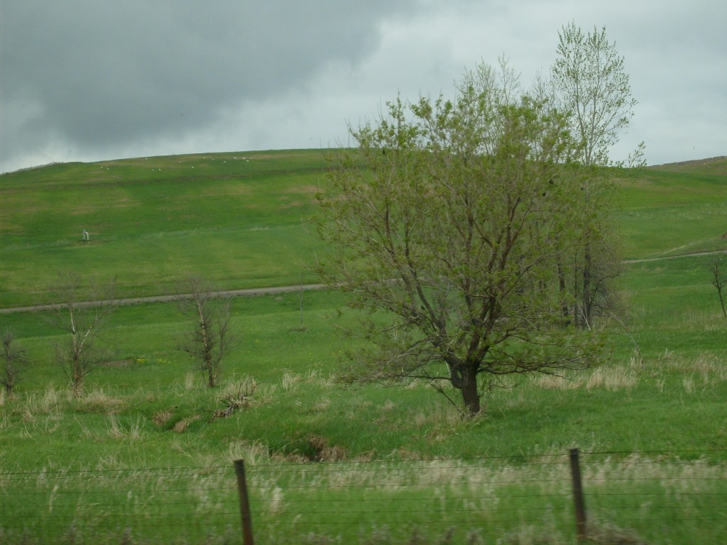Drive-by Trees