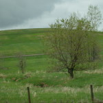 Wordless Wednesday – Drive-By Trees