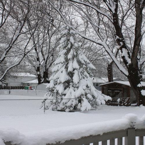 April 2010 Snow Storm 2