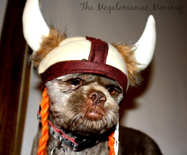 Bubba the Viking #PurinaHalloweenWM #sponsored #spon #ad