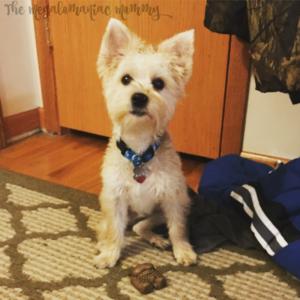 SmartBones Make Pups Happy + Giveaway – Ends 12/19