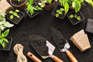A New Season, A New Garden: Top Apps for Planning, Planting and Picking